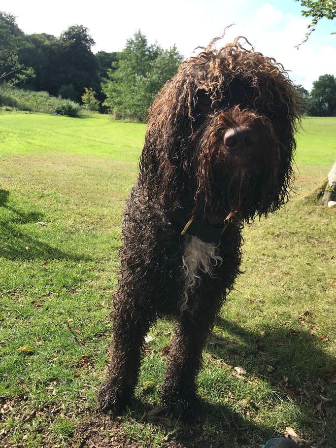 Auch Balu hatte Spass im Wasser bei seinem Urlaub in Wales