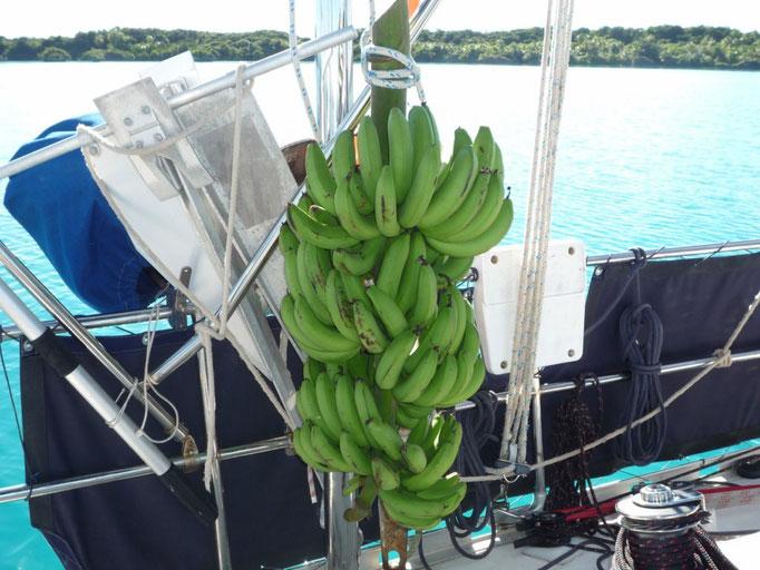 Bananas que nos regalaron en Vanua Balavu antes de partir