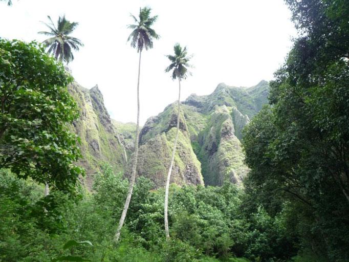 Enormes palmeras