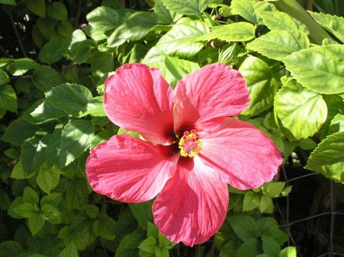 Las flores polinesias