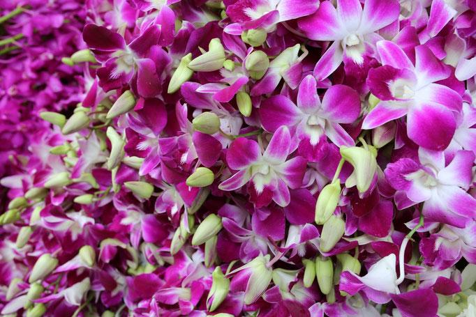 Flores de Bangkok