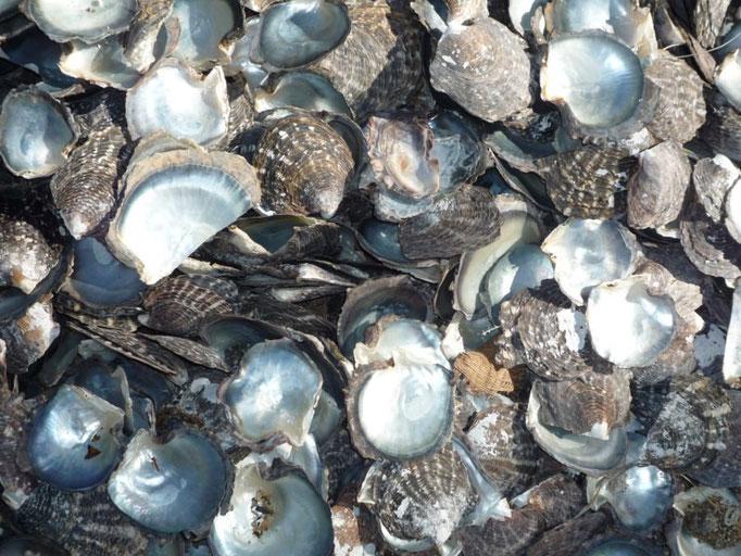 Las ostras que guardan un tesoro