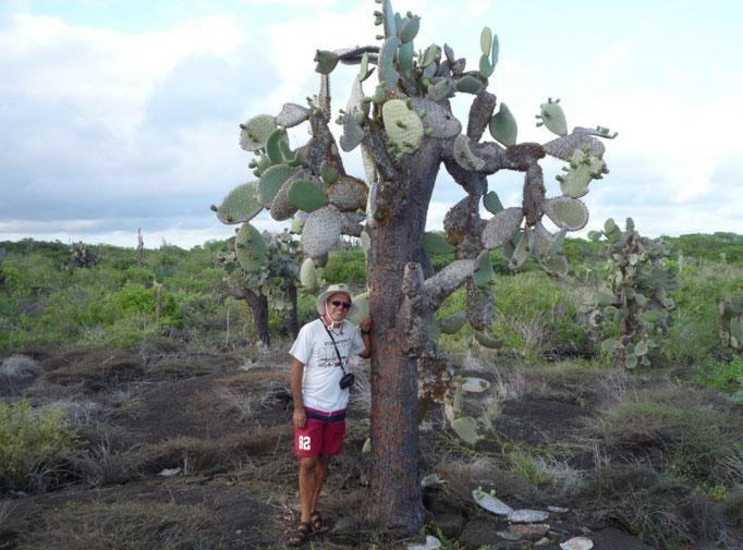 Cactus característicos de la isla