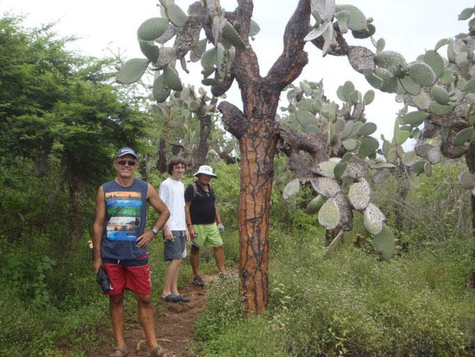 Los cactus, característicos de estas tierras volcánicas