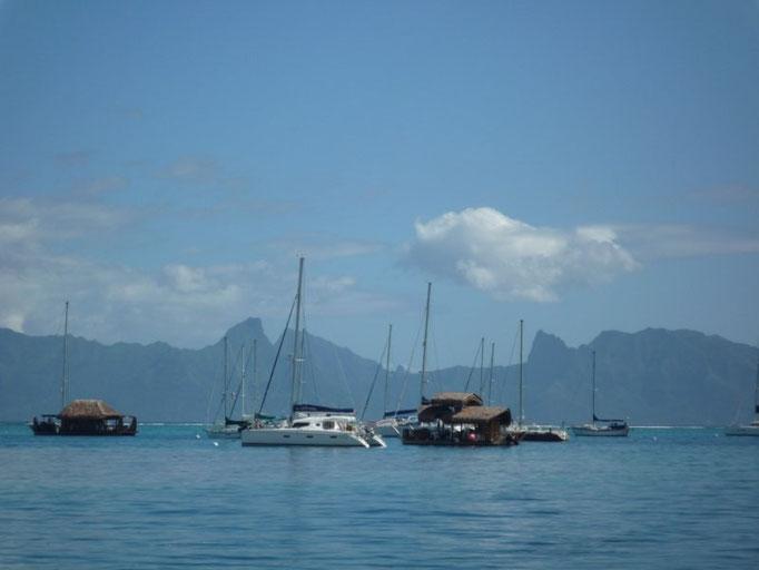 Barcos fondeados en Marina Taina