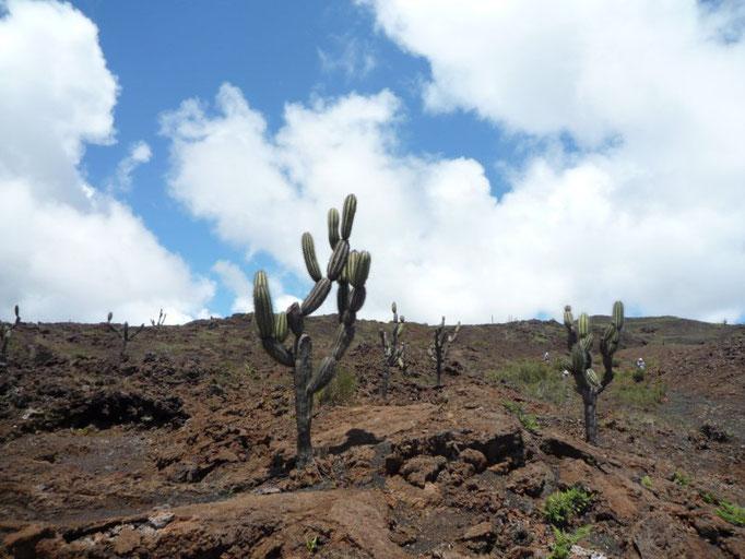 Los cactus que crecen 1 cm al año