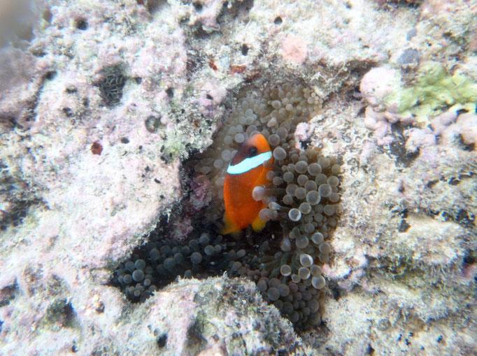 Encontramos a algún Nemo que otro debajo el agua