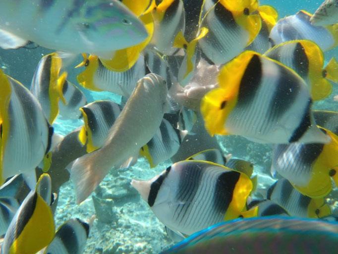 Coral Garden, dando de comer a los peces