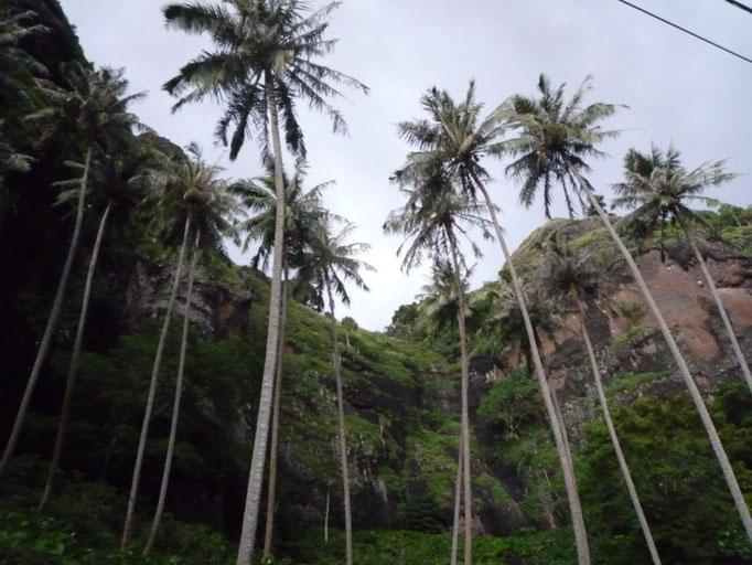 Las palmeras quieren tocar el cielo