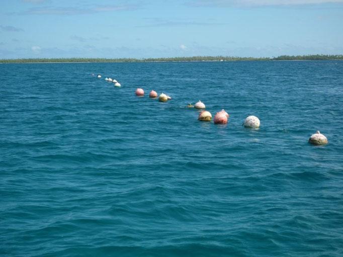 Boyas que señalan las granjas de coral