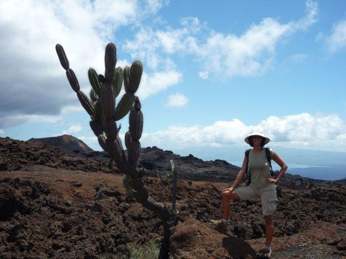 Los cactus son caracaterísticos del paisaje de Galápagos