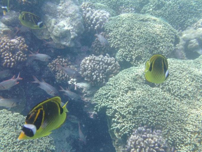 Fondo submarino de Rangiroa