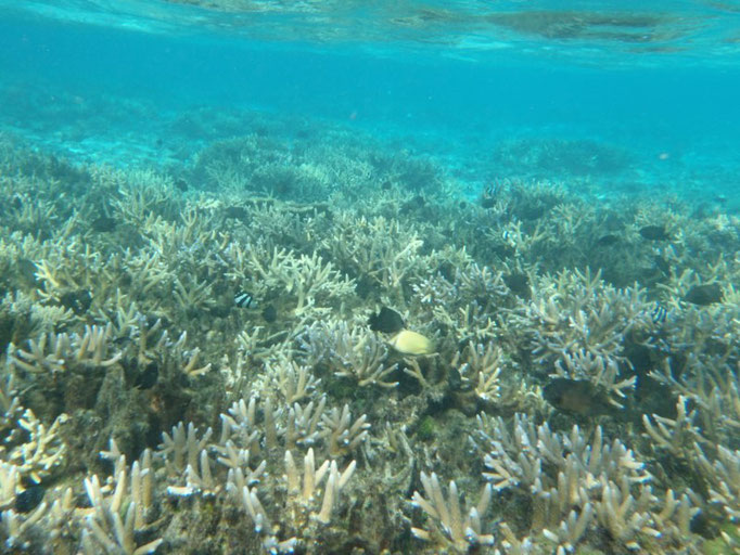 Coral Garden