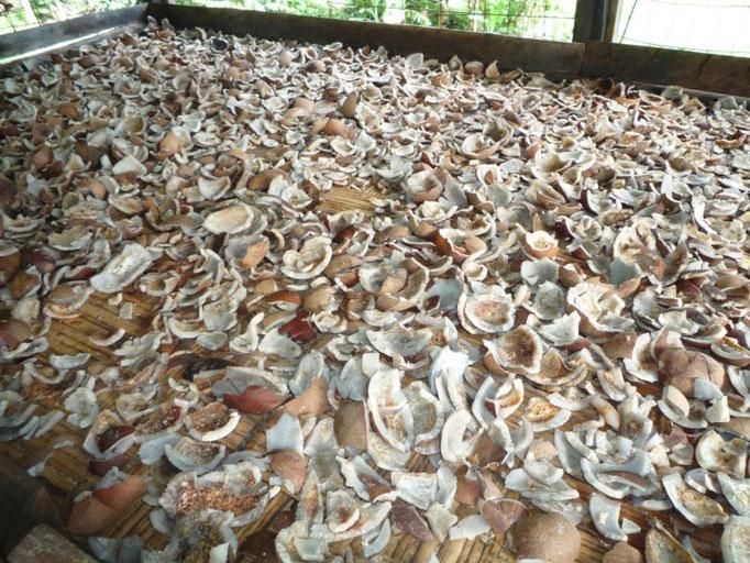 Secadero de cocos