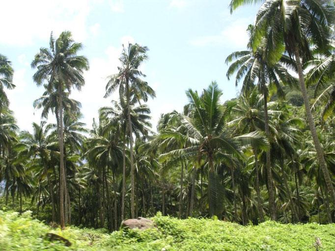 El interior de la isla
