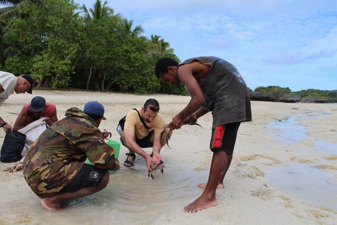 En busca de cangrejos