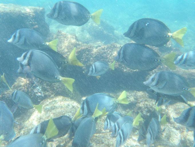Snorkel en Tintoreras