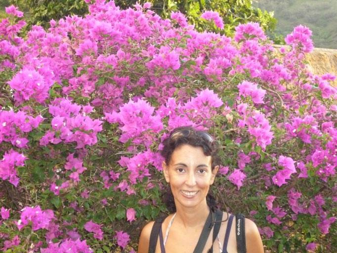 Las flores están por todas partes