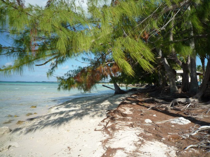 Playa con pinos