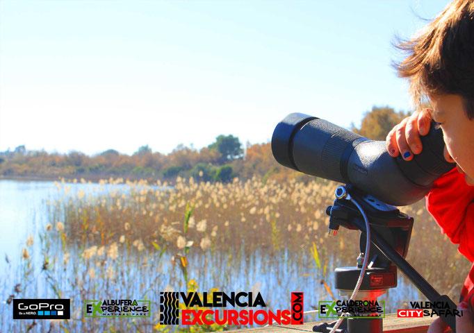 Aves en la Albufera ade Valencia. Descubre la fauna que habita en las zonas protegidas de Valencia