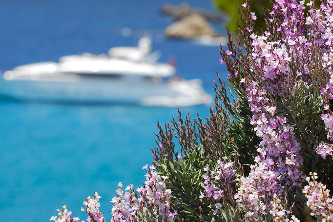 yacht broker Mallorca