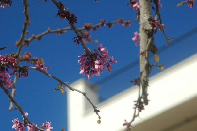 Gartenanlage Mallorca