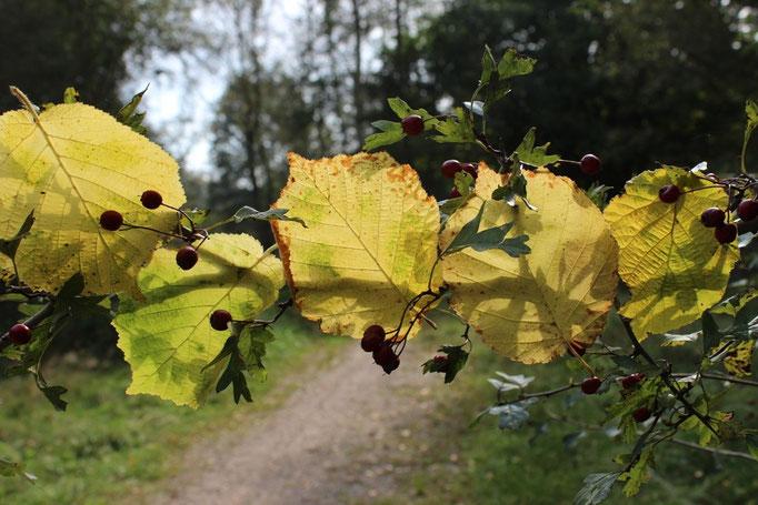 Landart, Blätter im Gegenlicht