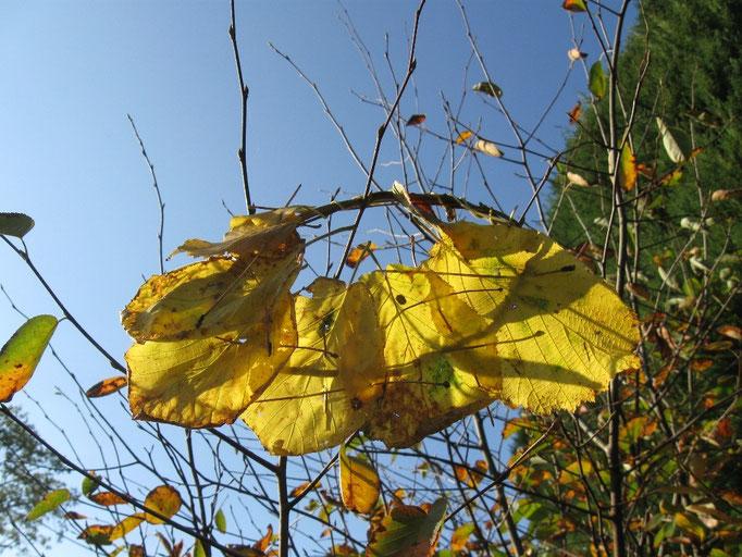 Landart mit Kindern, Blätter