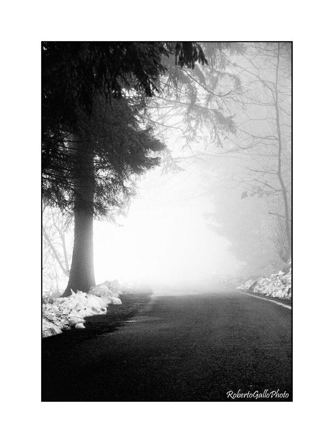 31/12/2009 Nebbia in pineta a Montegrino