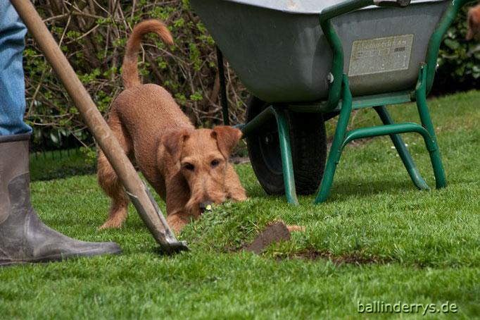 Coffee hilft bei der Gartenarbeit...