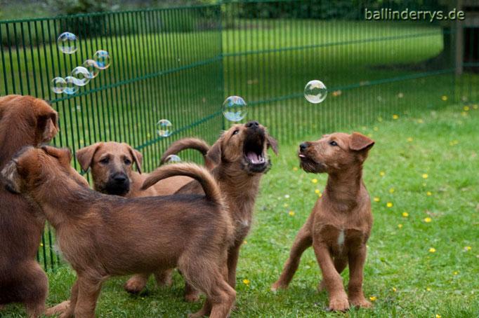 J-Wurf - Woche 9 - Seifenblasen sind toll...