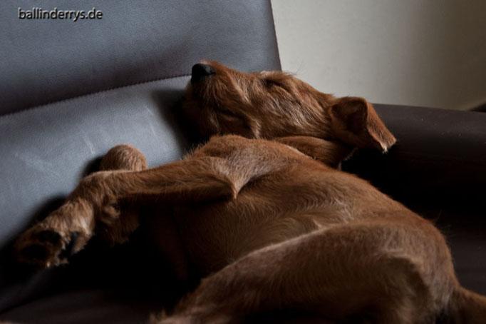 Coffee schläft entspannt...