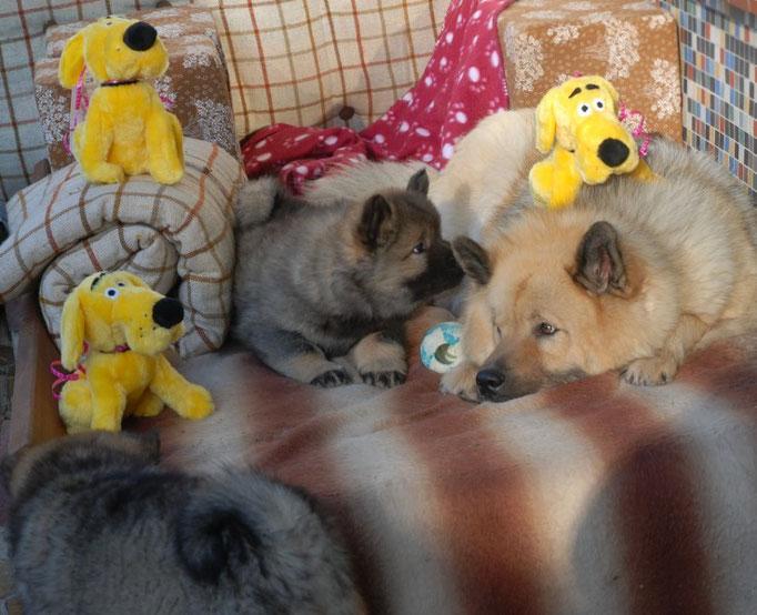 gelbe Stoffhunde von Papa Avito