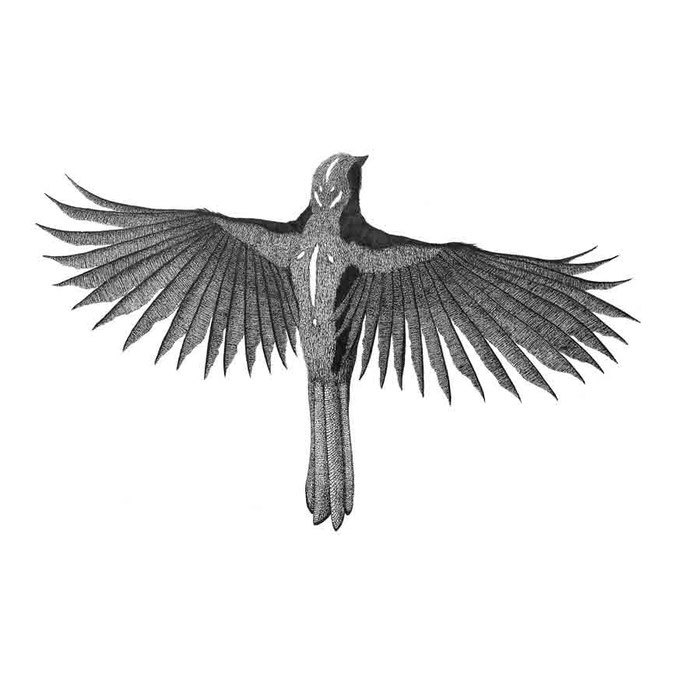The Nightbird