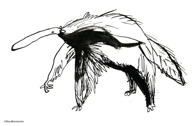 """""""Ameisenbär""""(2016), freie Arbeit aus der Serie """"Tierstudien"""", Tinte und Stahlfeder"""