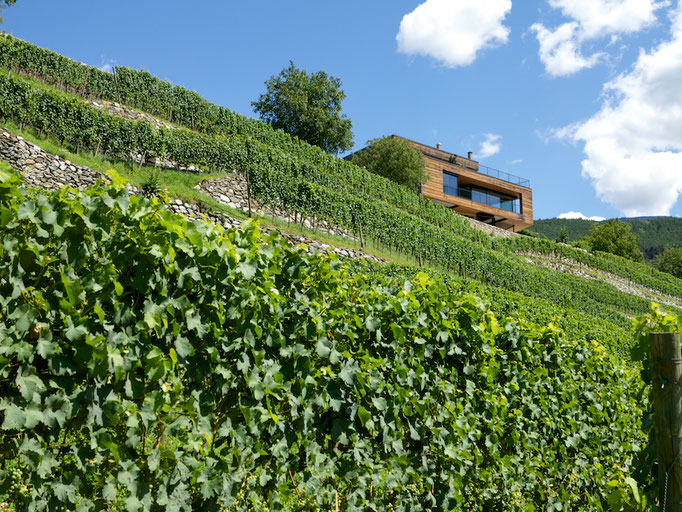 Vineyard, Kloster Neustift, Südtirol (Alto Adige), Italy