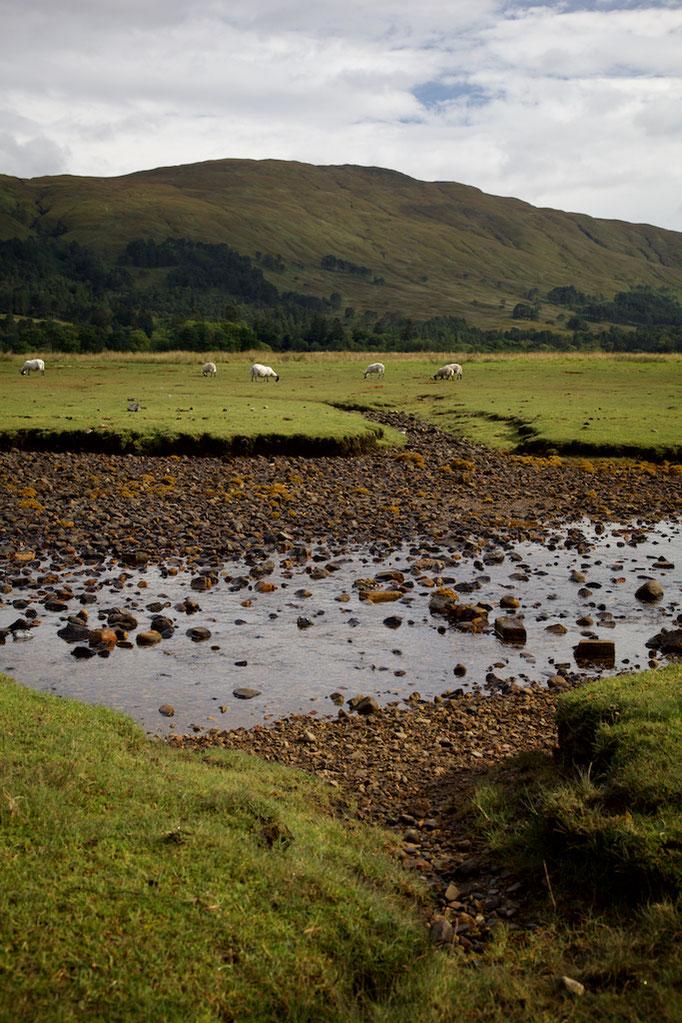Ardgour, Loch Linnhe