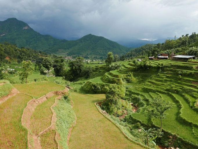 Wunderschöne Landschaft mit grünen Reisfeldern und den Bergen des Himalaya im Hintergrund.
