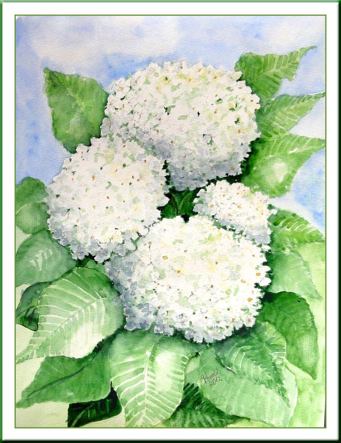 Aquarell: Schneeball, nach Original 20x 30 cm