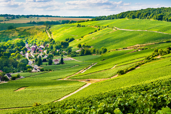 Panorama des vignobles Barzy-sur-Marne. @Cambon