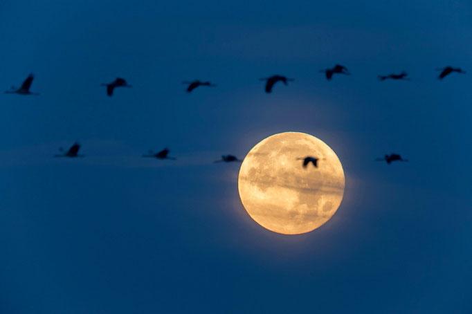 Mond mit Kranichen