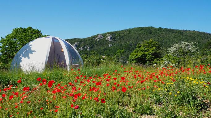 Wigwam bulle lavande. Izon Nature : hébergements et table d'hôtes insolites et écoresponsables dans la Drôme provençale, trek dans la Méouge