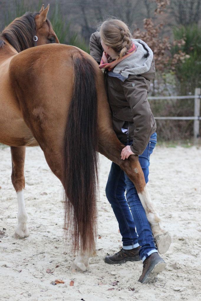 Tierphysiotherapie Tierphysio Pferdephysio Pferdephysiotherapie Julia Wallerius Wenden Chiro Pferd Physio Tierchiropraktik
