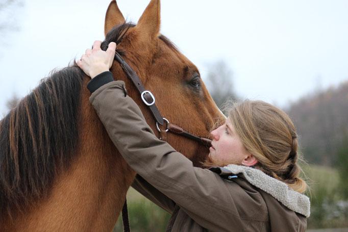 Tierphysiotherapie Tierphysio Pferdephysio Pferdephysiotherapie Julia Wallerius Wenden Chiro Pferd Physio Tierchiropraktik Sauerland Siegerland