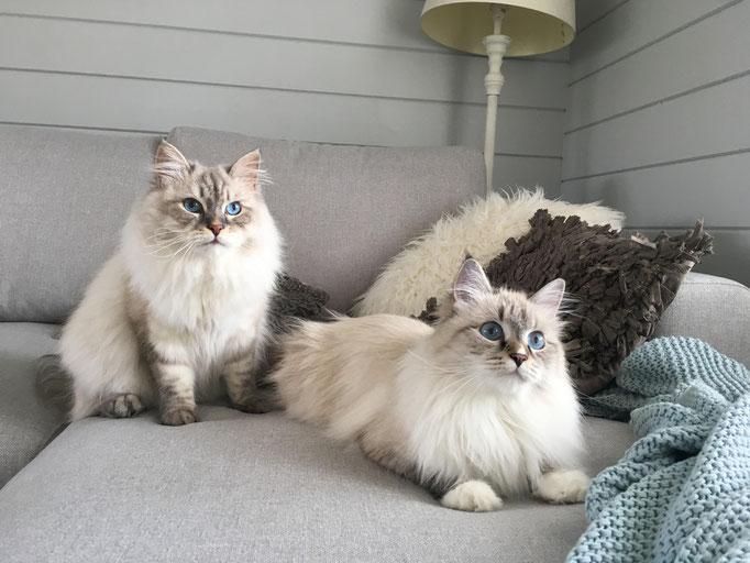 Duchesse (Farah) und Aramis