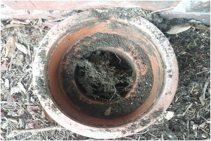 Bock drains