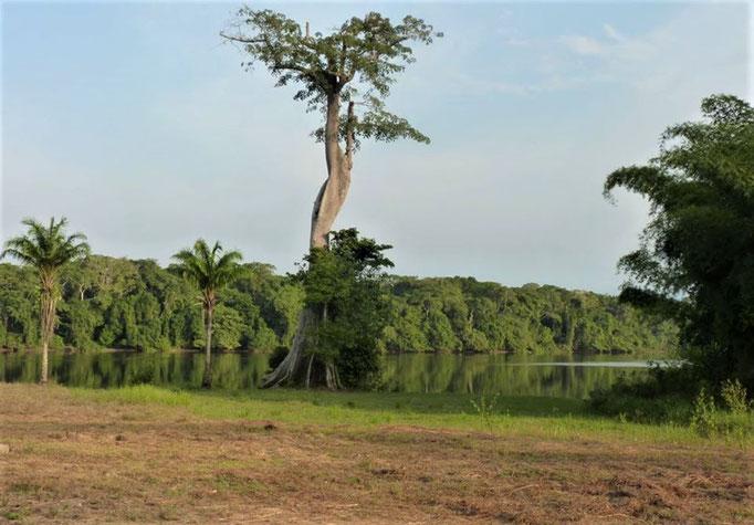 Moloundou, Parc National de Lobeke