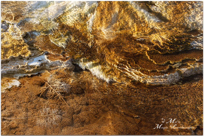 """""""Bacterial Abstracts #2"""" (2012)"""