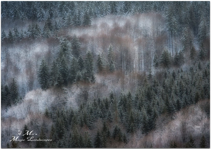 """""""Dreamy Forest"""" (2013)"""