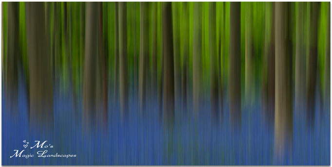 """""""Painted Forest"""" (2014)"""